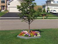 bó vỉa cây với vườn hoa
